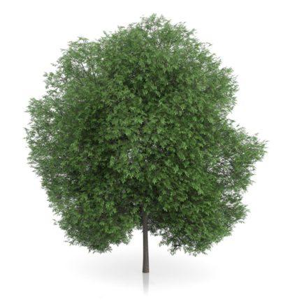 3D Tree 3 FREE