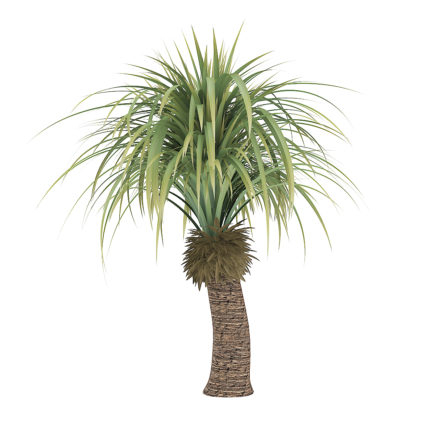 3d small palm tree