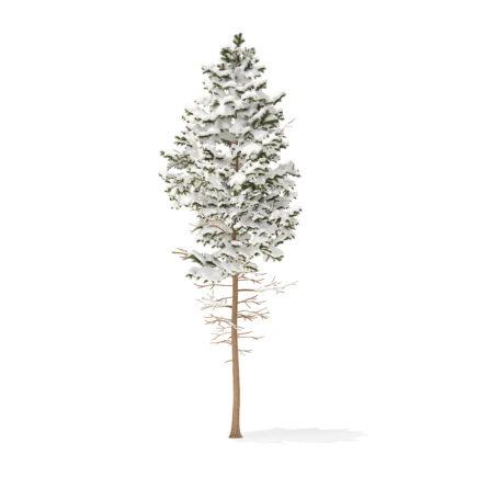 Pine Tree with Snow 3D Model